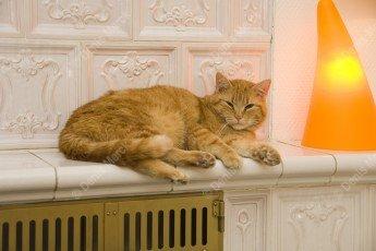 chat europeen roux couche sur un poele en faience