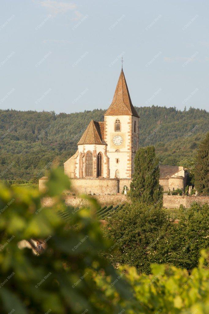 Alsace : église de Huhnawihr dans la vignes