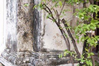 Végétation sur un mur en Thailande