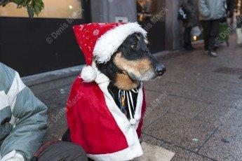 Le chien attend patiemment dans son habille de père Noël