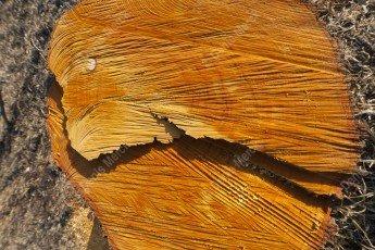 Tronc d'arbre coupé