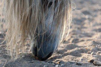 museau d'un cheval