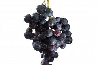grappe de raisin noir détourée