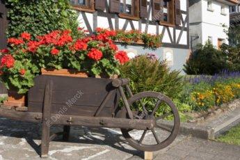Brouette remplie de geranium à Seebach
