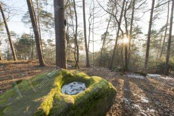 Pierre à cupule dans la forêt de Wingen