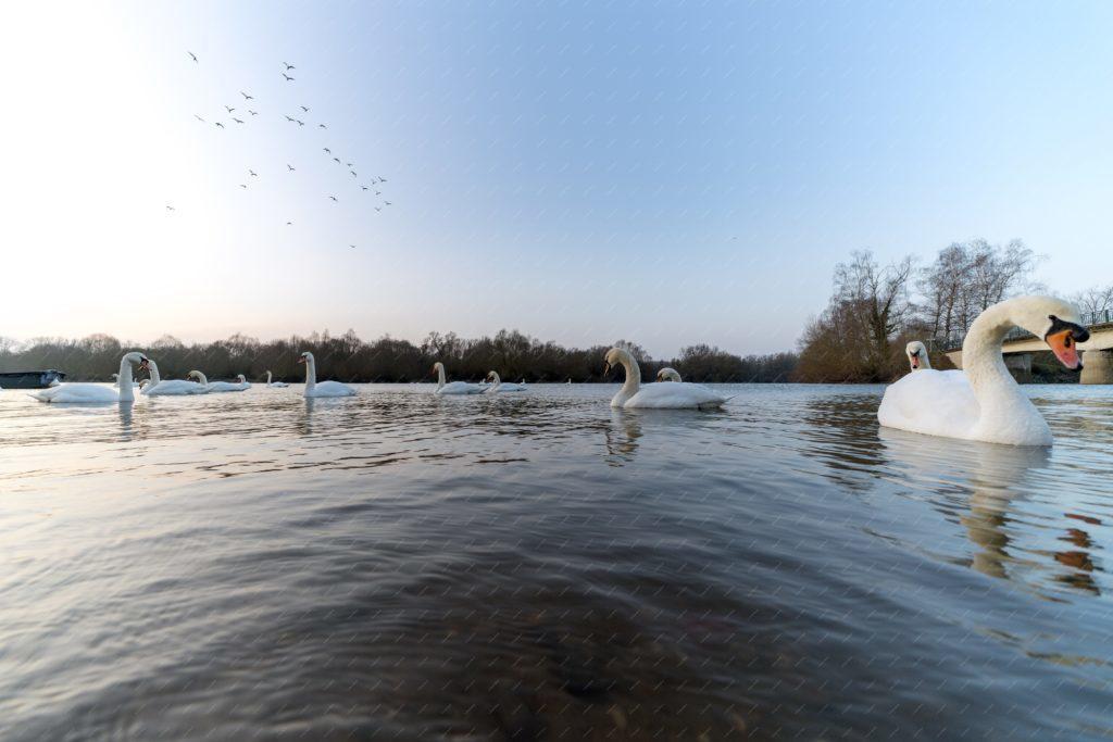 La Réserve Naturelle du Delta de la Sauer