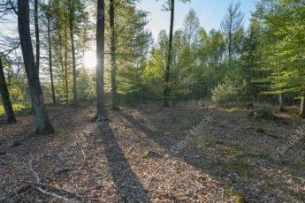 Forêt de Haguenau