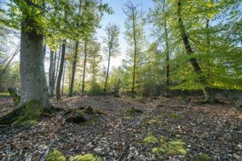 Forêt de Haguenau au printemps