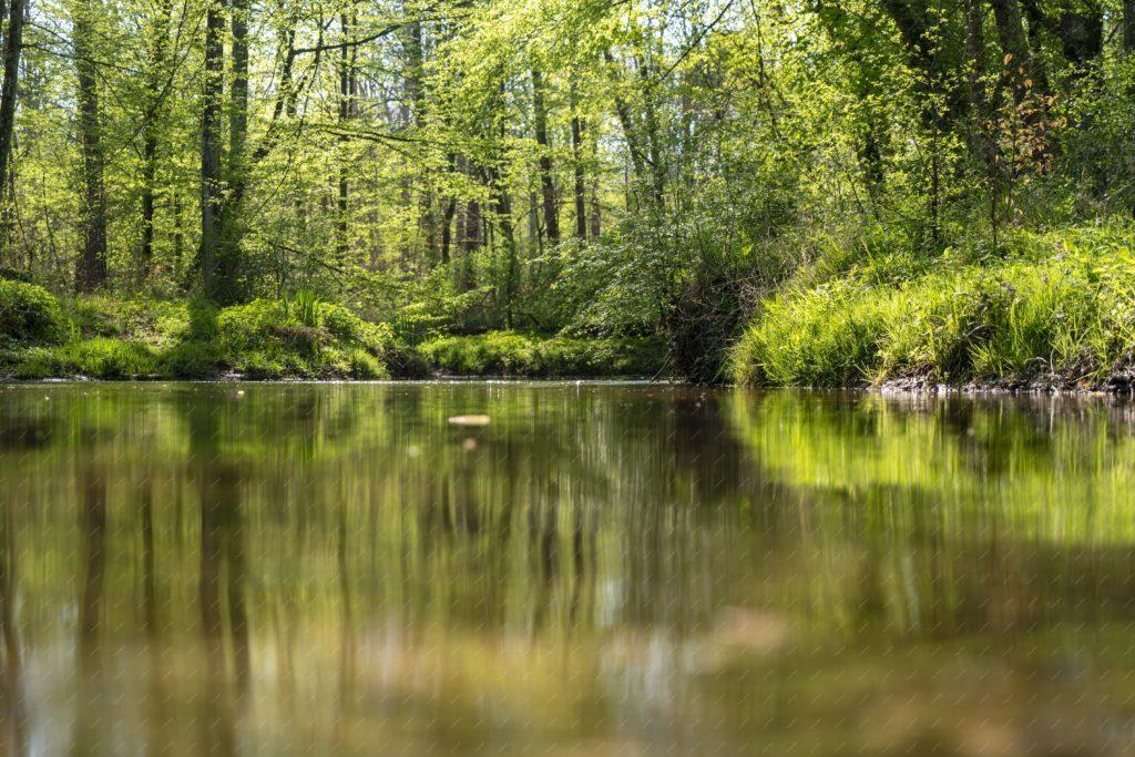 L'Eberbach dans la forêt de Haguenau