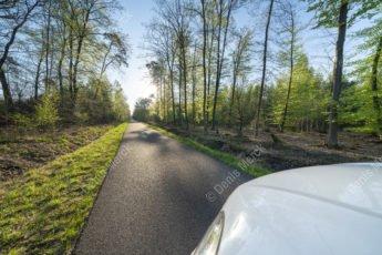 La route forestière de l'Ermite