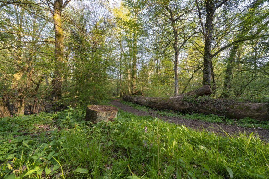 La Forêt de Haguenau au printemps