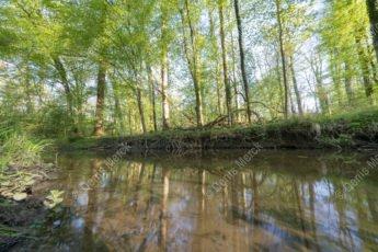 La rivière Eberbach