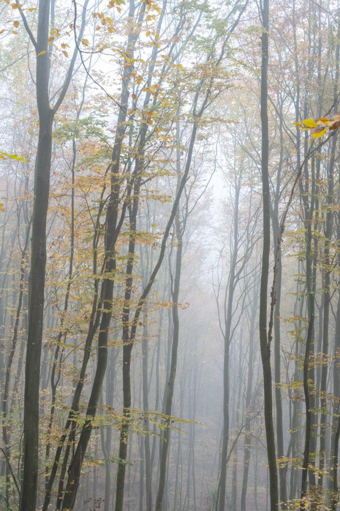 Forêt d'automne dans le brouillard